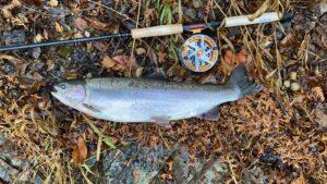 Rainbow Trout Next To A Okuma Float Rod and Okuma Raw II CenterPin.