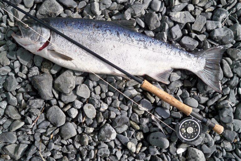 Float fishing rod reel combo ontop of Steelhead.