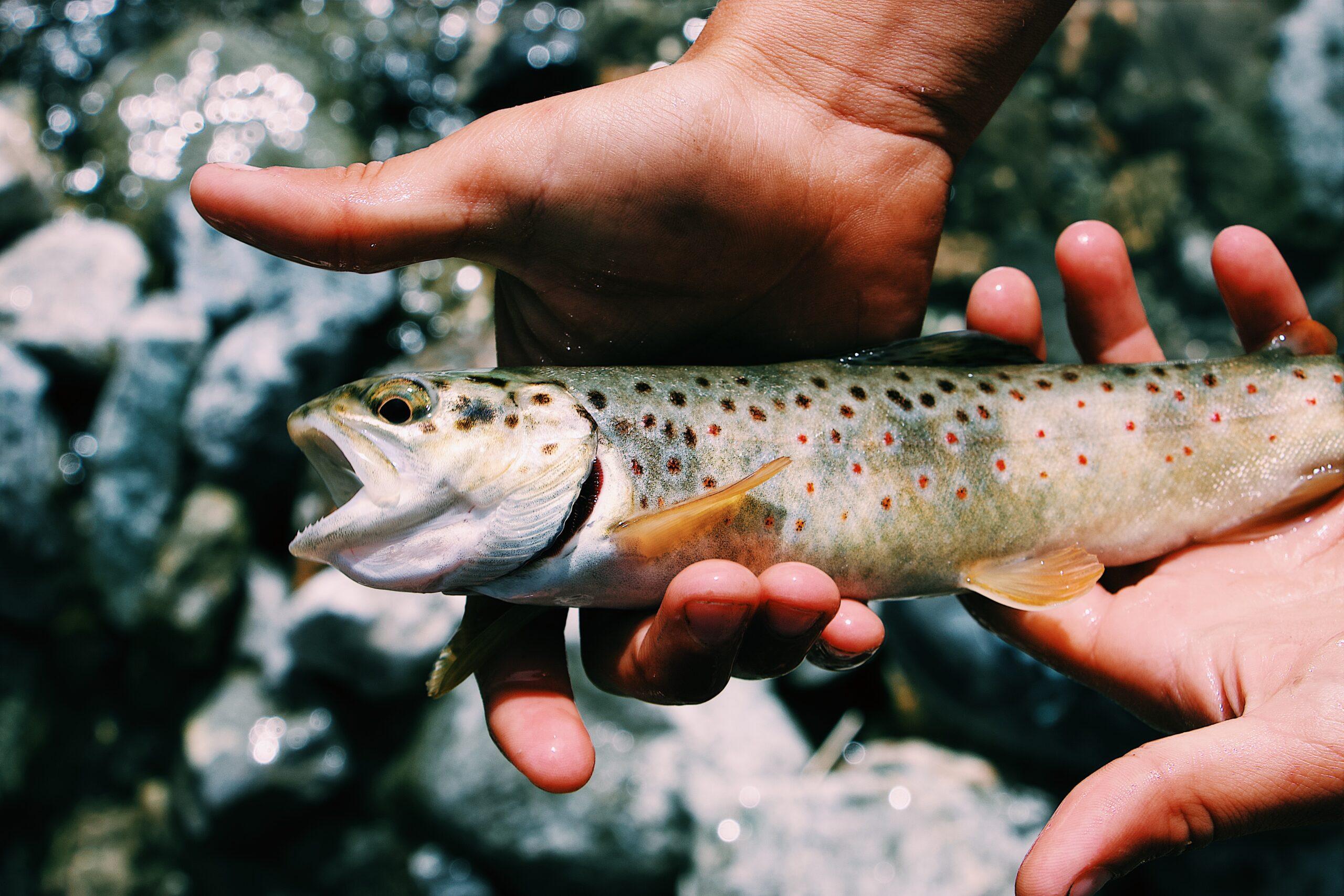Best 6 Monofilament Fishing Line